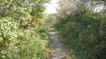 タブノキ ぶらり探訪三浦半島