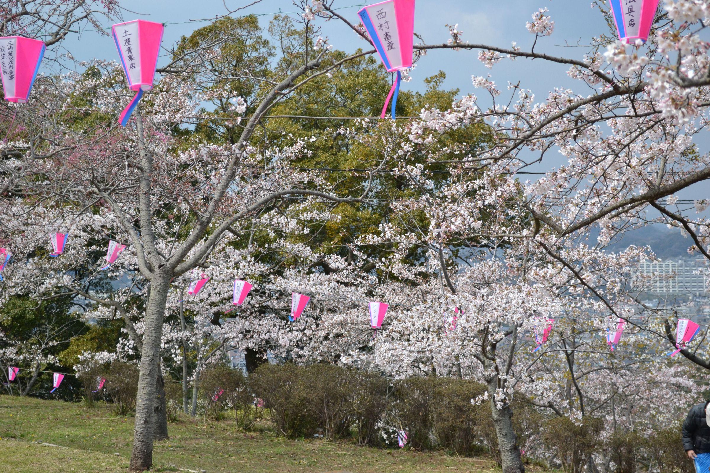 http://www.azami.sakura.ne.jp/miurahantou/yamakawakouen/kinugasayamakouen-20120406-12.jpg